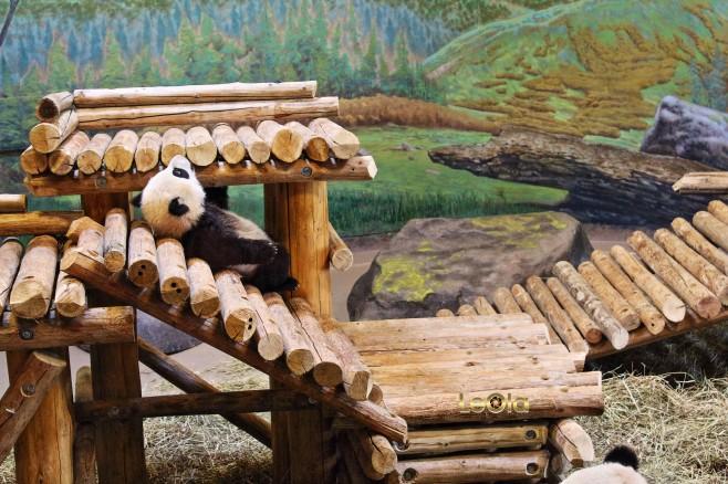 IMG_1495 Panda copy