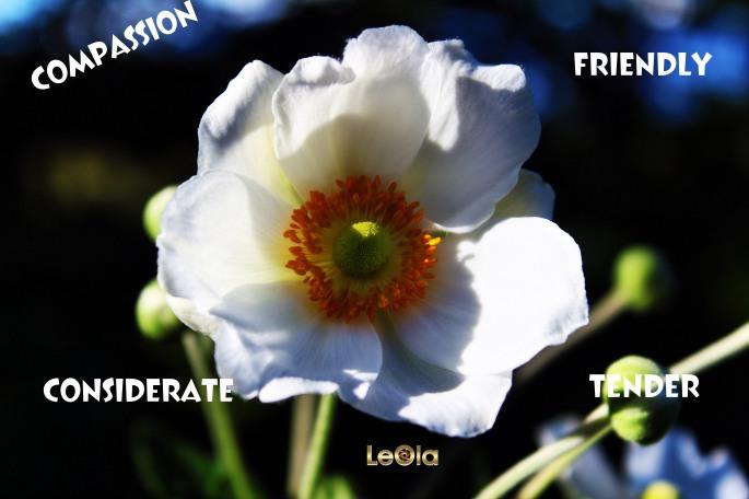 img_7754-flower