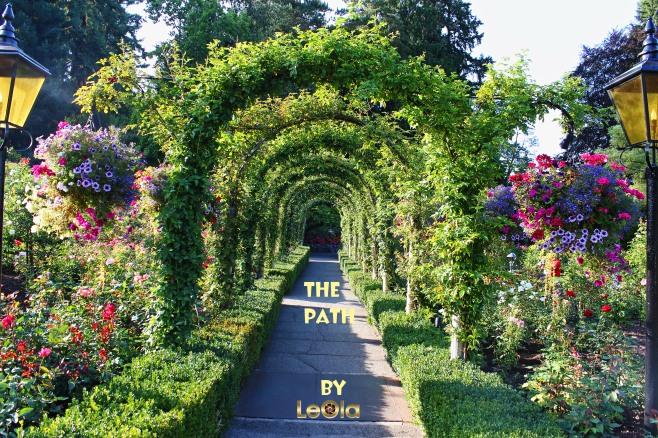 img_9188-pathway-copy