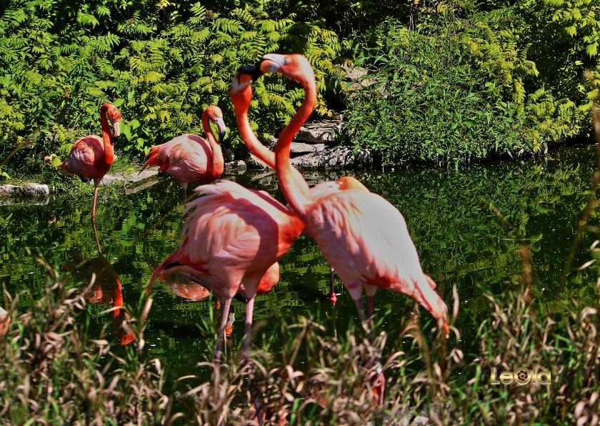 img_9782-flamingosa-copy
