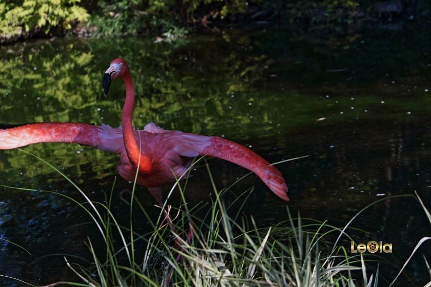 img_9833-flamingo-copy