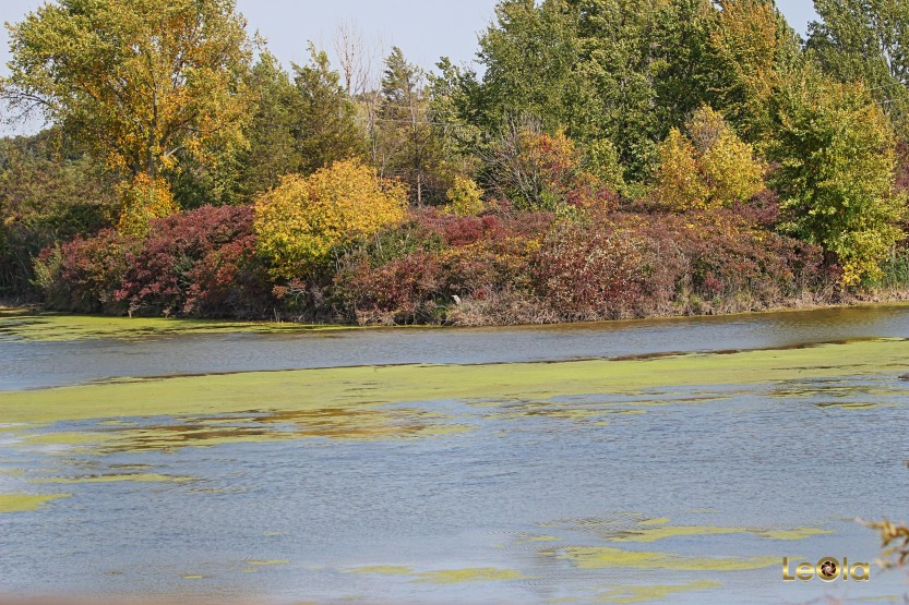 img_-hillmans-marsh-copy
