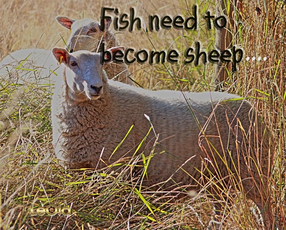 IMG_5599 Sheep  a copy.jpg
