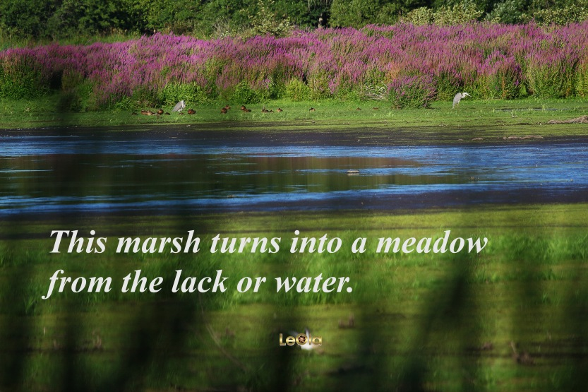 img_7405-from-marsh-to-meadow-copy