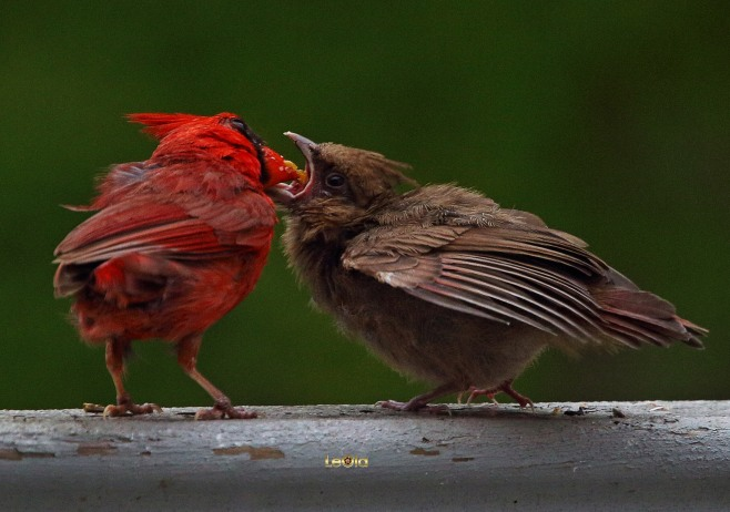 Cardinalsaa #7.jpg