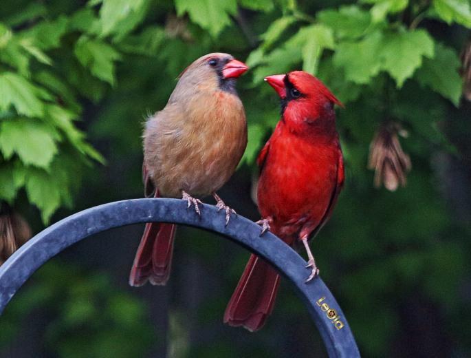 cardinalss-1