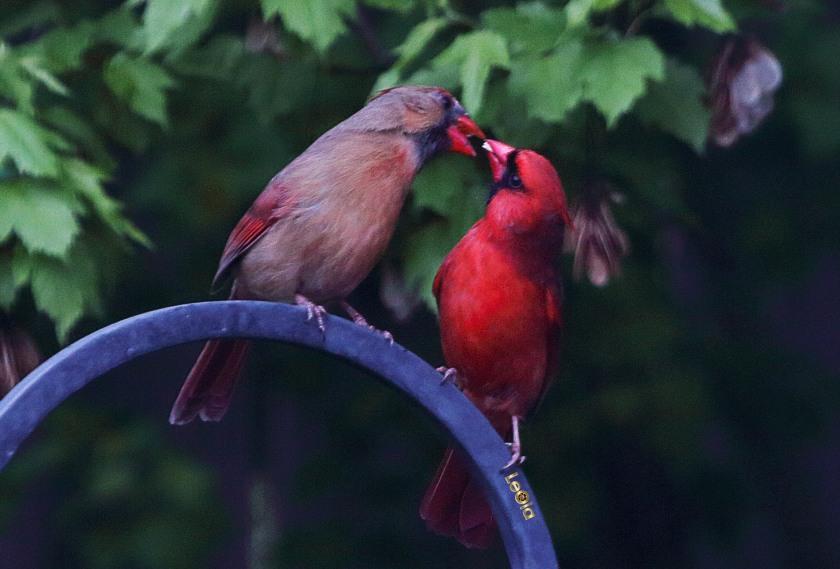 cardinalss-2