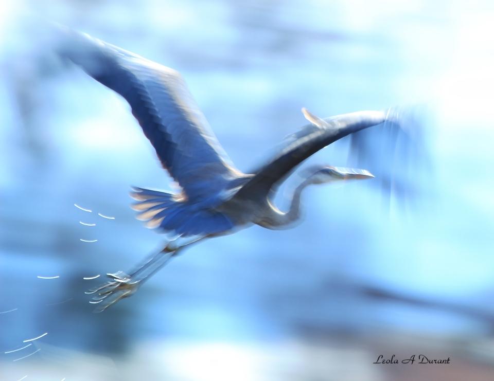 untitled-heron-a_edited-1