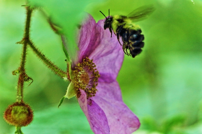 IMG_0572 Wild Flower.JPG