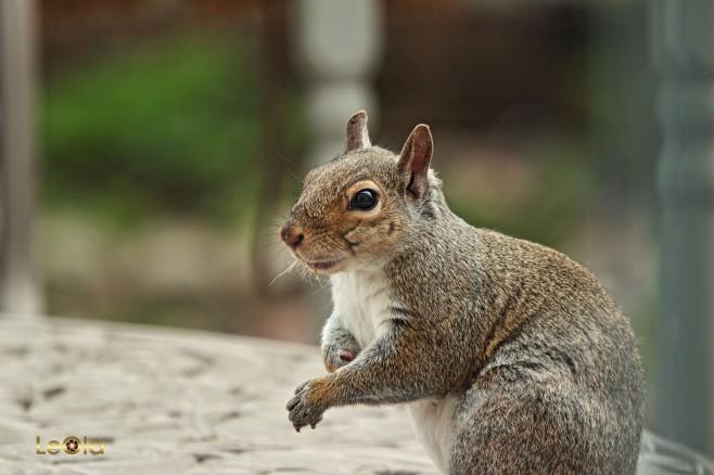 IMG_2473 Squirrel copy