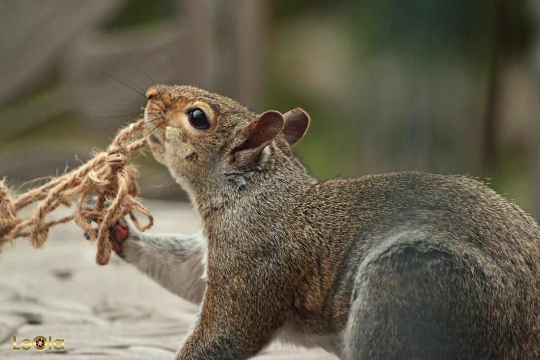 IMG_2482 Squirrel copy.jpg