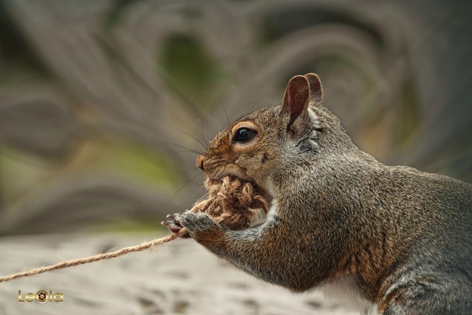 IMG_2502 Squirrel copy.jpg