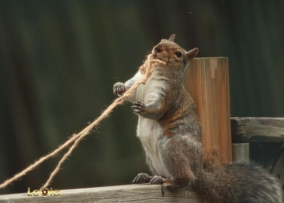 IMG_2515 Squirrel copy