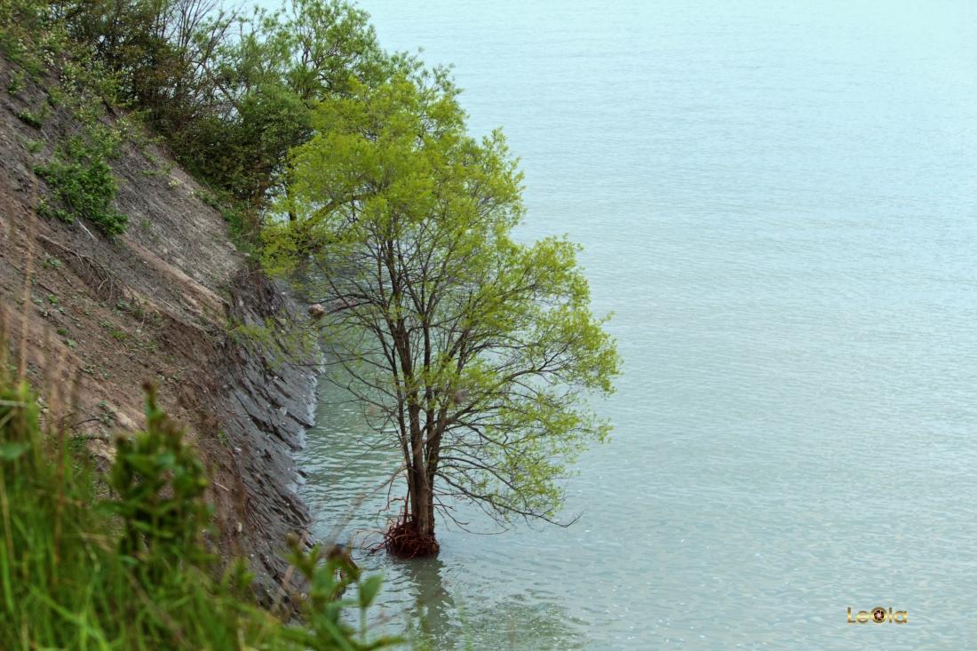 IMG_3006 Tree in Lake copy.jpg