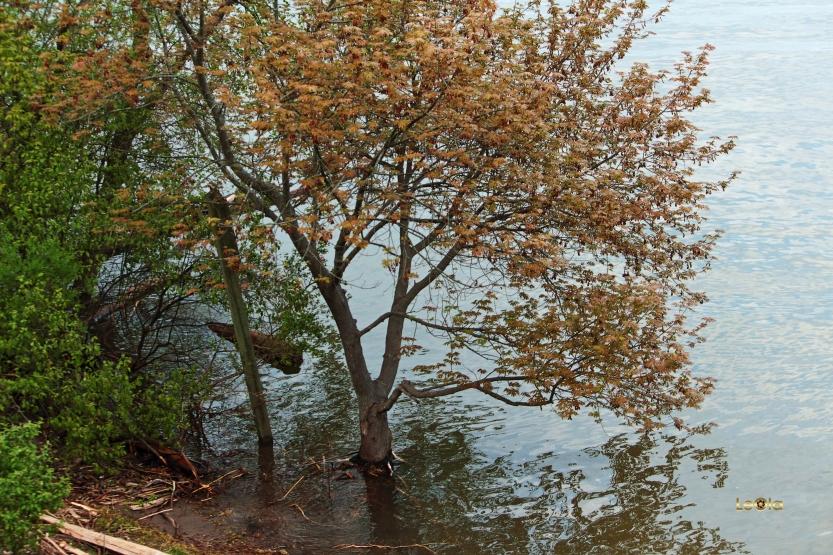 IMG_3010 Tree in water copy.jpg